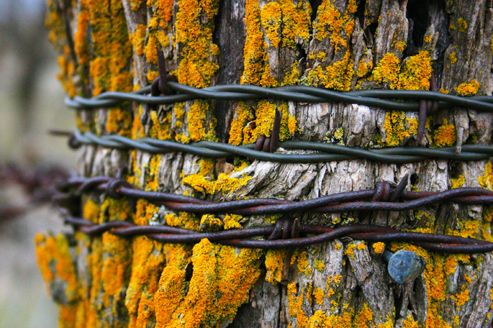 Old fencepost with barbwire.